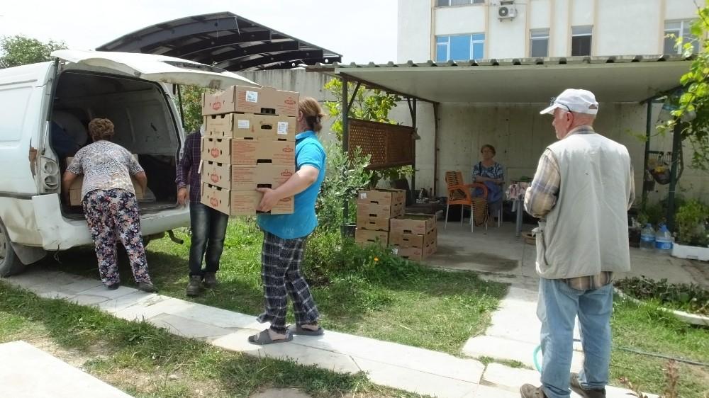 Burhaniye Türkiye'nin stevia üretim merkezi oldu