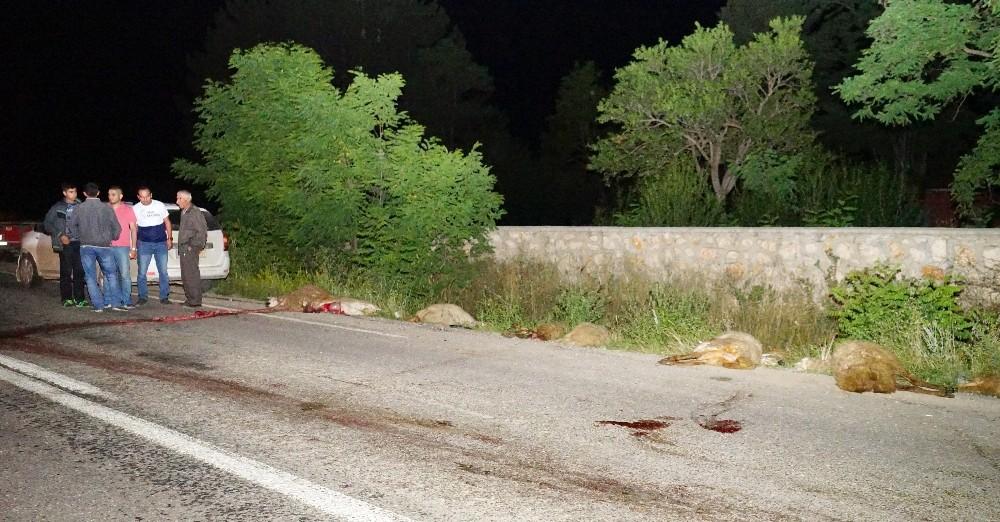 Koyun sürüsünü otomobil çarptı: 22 koyun telef oldu