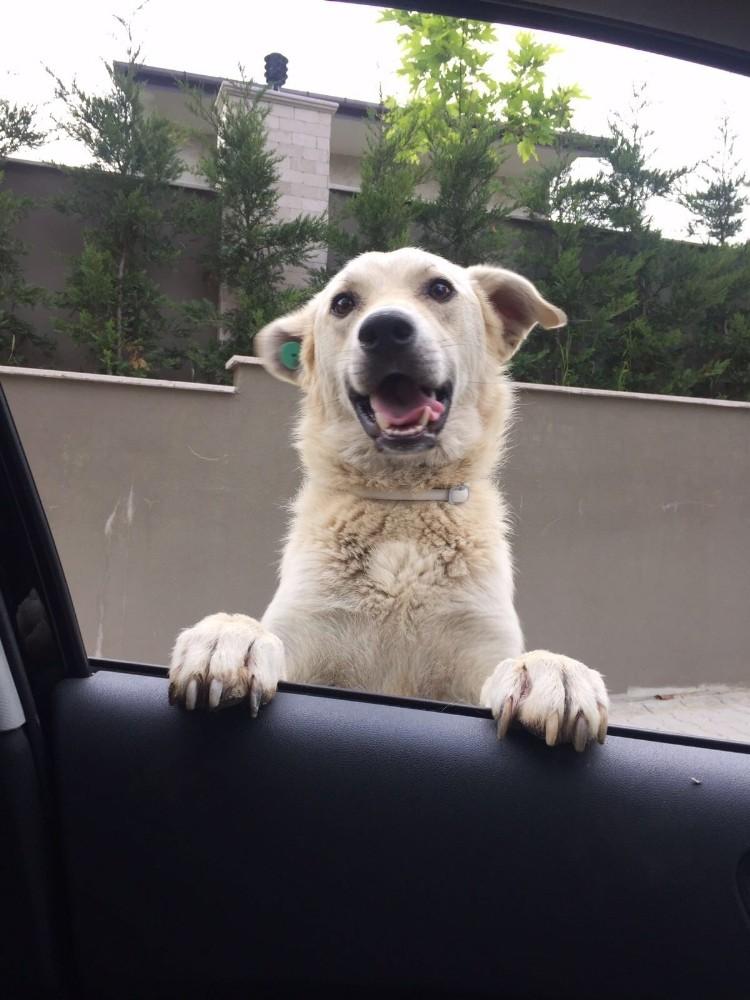 Komşusunun köpeğini kaçırmaktan yargılanıyor