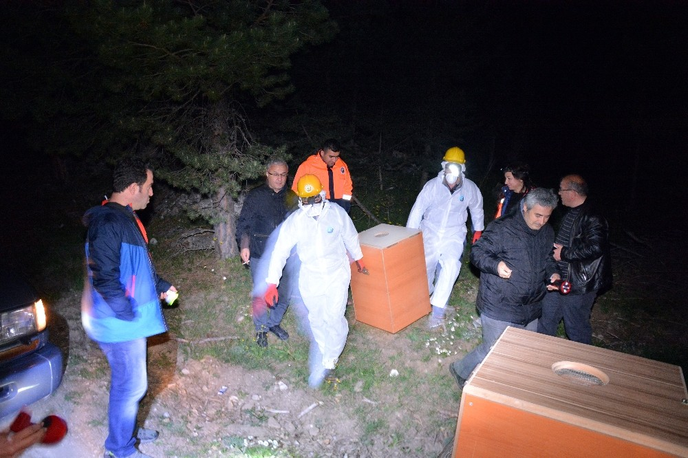 Karıncalara gece yarısı operasyonu