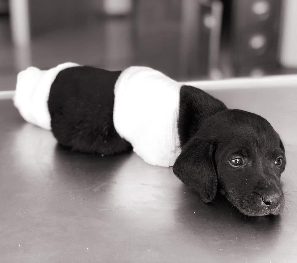 Yavru köpek olayında tutuklanan kepçe operatörü serbest bırakıldı