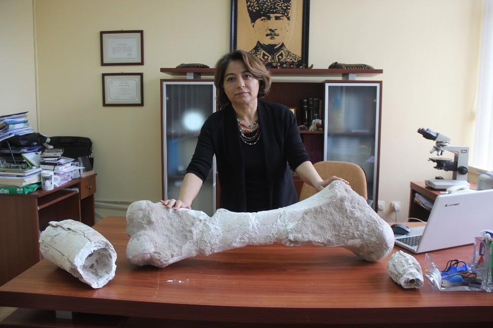 Geçmişte tropikal iklime sahip olan Sivas'ta 10 milyon yıllık fosil