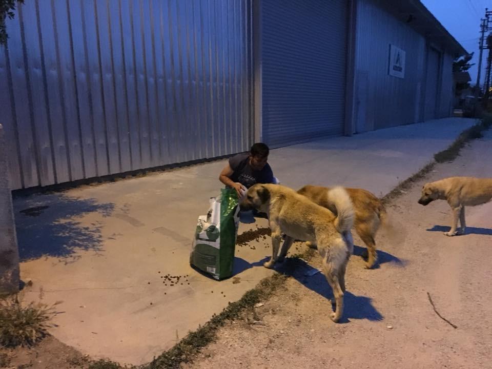 Herkes iftar yaparken onlar sokak hayvanlarını besliyor