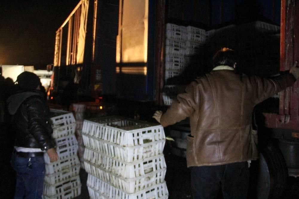 Devrilen kamyondaki tavukların bir kısmı telef oldu