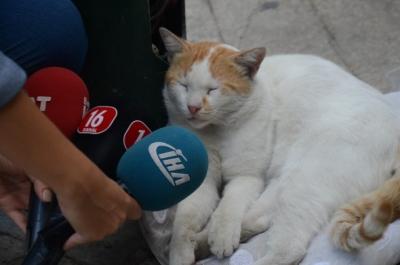 Bu Kedi Bursa'da Fenomen Oldu