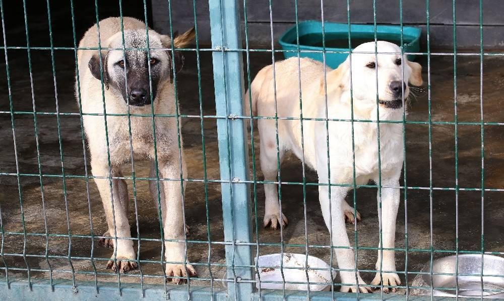 Polatlı'dan gelen köpekler sağlıklarına kavuşuyor